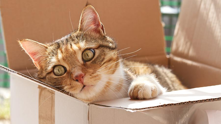 Adaptação de gatos no novo lar